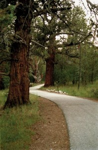 The Alpine Bike Path at Big Bear Lake waunders into the woods just past Juniper Point.