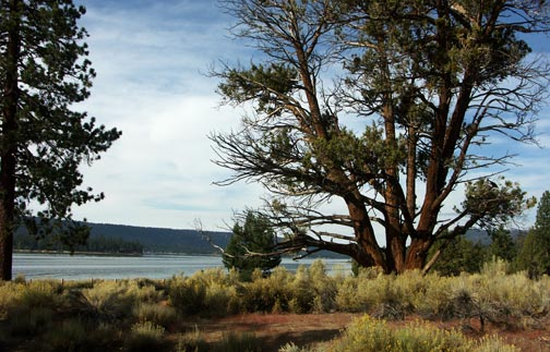A scenic view of Big Bear Lake from the trailhead of the Woodland Interpretive Trailhead parking lot. - © Rick Keppler.